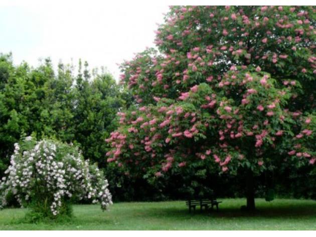 Giardino delle Rose Del Bufalo di Valleranello