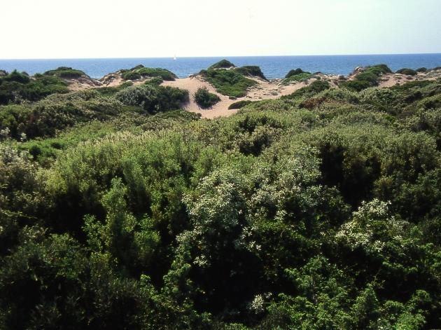 Le dune costiere