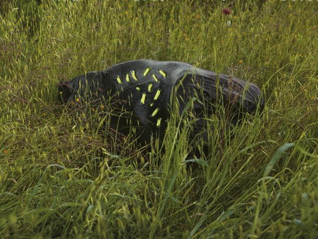 Nascite di un giardino – Wild Facts