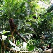 Orto Botanico di Roma - Serra Tropicale