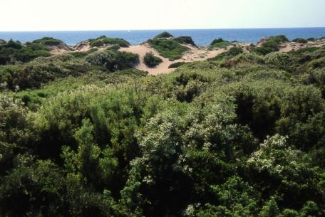 Le dune costiere