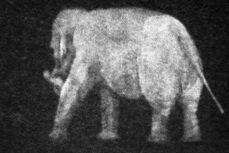 Marta Roberti, there is an elephant in the room