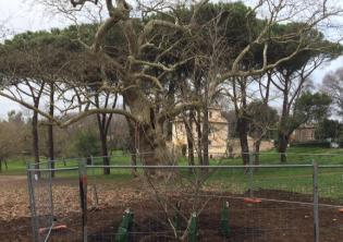 Foto profilo ufficiale Facebook Amici di Villa Borghese